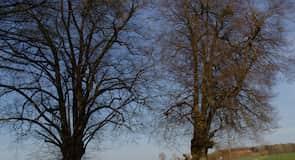 Eichelsachsen