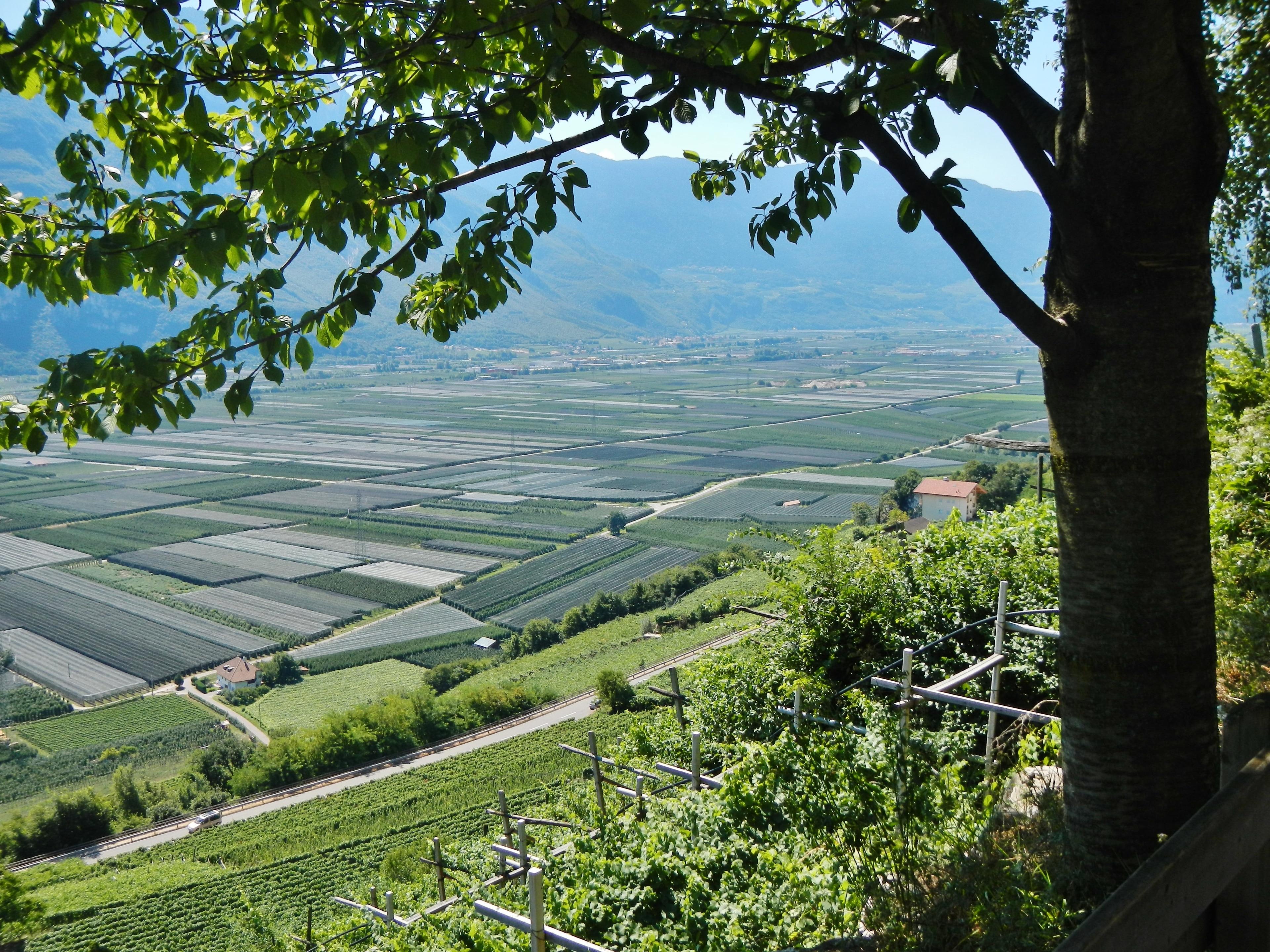 Kurtatsch an der Weinstraße, Trentino-Zuid-Tirol, Italië
