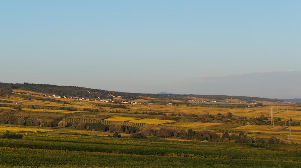 """Foto """"Geisenheim"""" von DXR (CC BY-SA)/zugeschnittenes Original"""