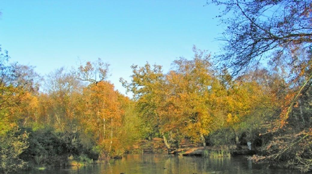 Foto 'Buckhurst Hill' van Brian Gotts (CC BY-SA) / bijgesneden versie van origineel