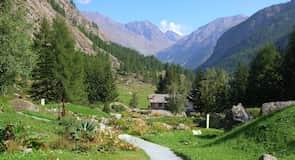 Paradisia Alpine Botanisk Have