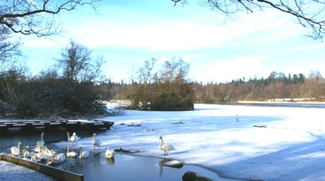 """Photo """"Bolam Lake Country Park"""" by john sayers (CC BY-SA) / Cropped from original"""