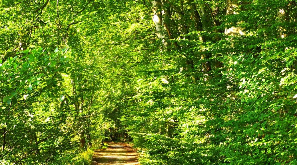 """Foto """"Radolfzell am Bodensee"""" von Dg-505 (CC BY)/zugeschnittenes Original"""