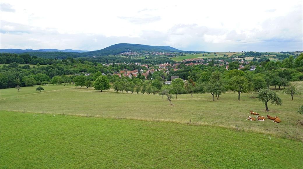 Foto 'Niederbronn-les-Bains' van Jean-Pierre Dalbéra (CC BY) / bijgesneden versie van origineel