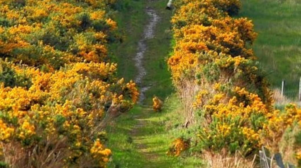 "Photo ""Loch Carron"" by Mick Garratt (CC BY-SA) / Cropped from original"