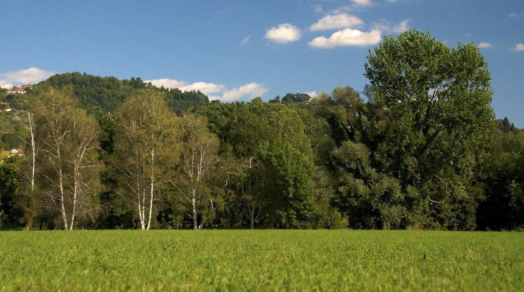 """Bildet «Moncalieri» tatt av Uccio """"Uccio2"""" D'Ago… (CC BY-SA) / originalbilde beskjært"""