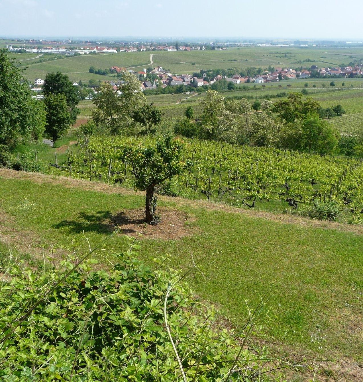 Battenberg (Pfalz), Rhineland-Palatinate, Germany