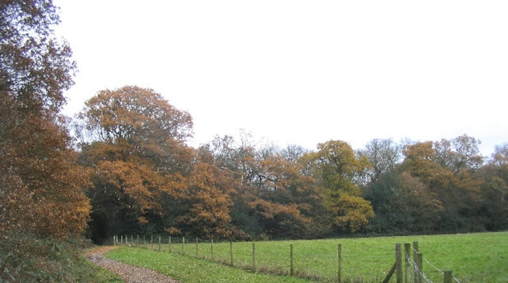 """Photo """"Hainault Forest Country Park"""" by John Winfield (CC BY-SA) / Cropped from original"""