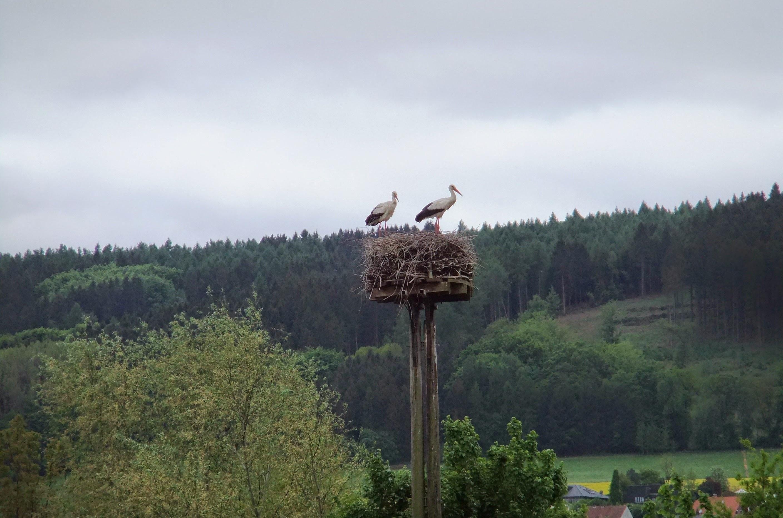 Lubbecke, North Rhine-Westphalia, Germany