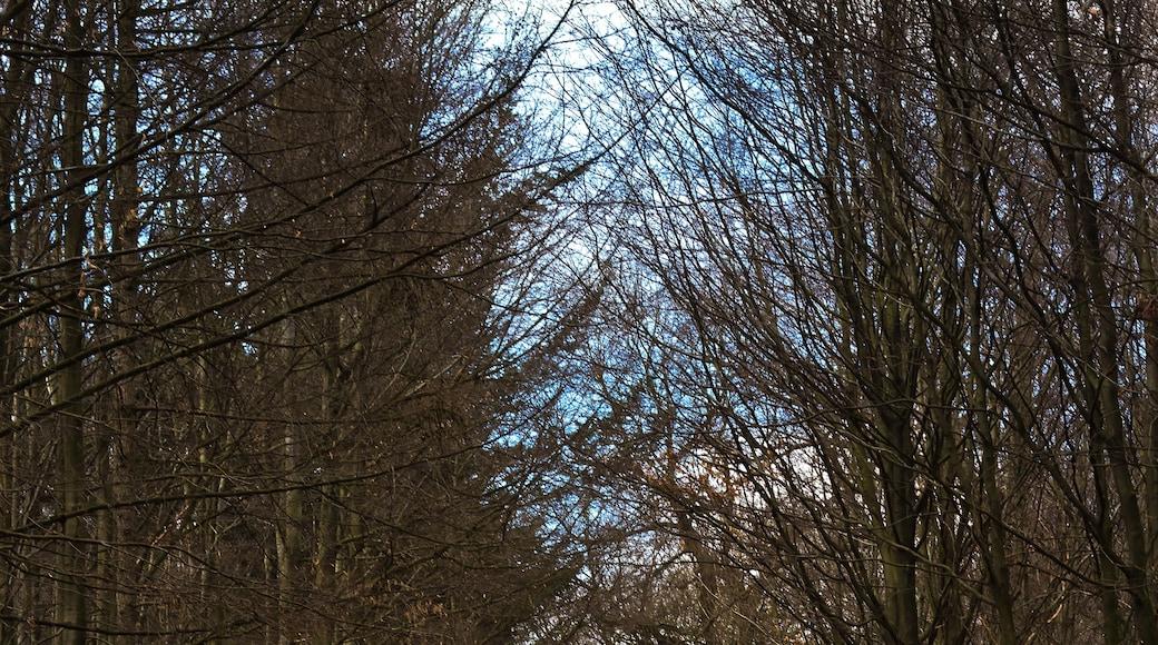 """Foto """"Eschweiler"""" von Grunpfnul (CC BY)/zugeschnittenes Original"""