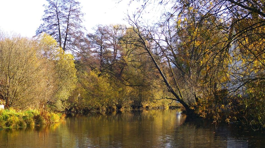 "Foto ""Donaueschingen"" von Alexander Reuss (CC BY)/zugeschnittenes Original"