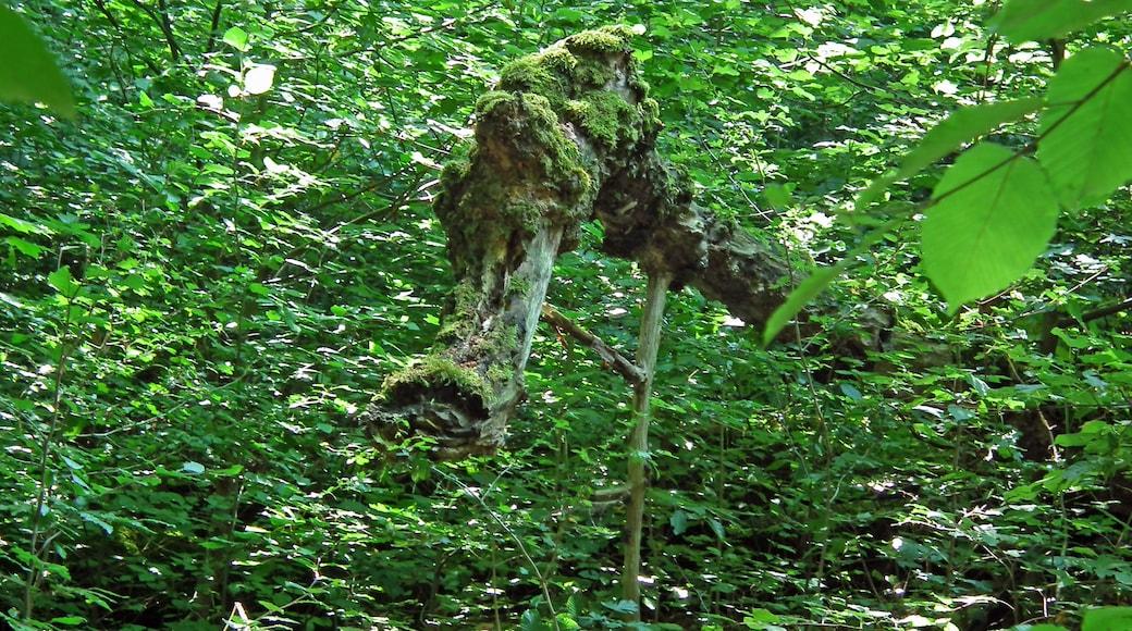 """Foto """"Nationalpark Hainich"""" von Michael aus Halle (CC BY-SA)/zugeschnittenes Original"""