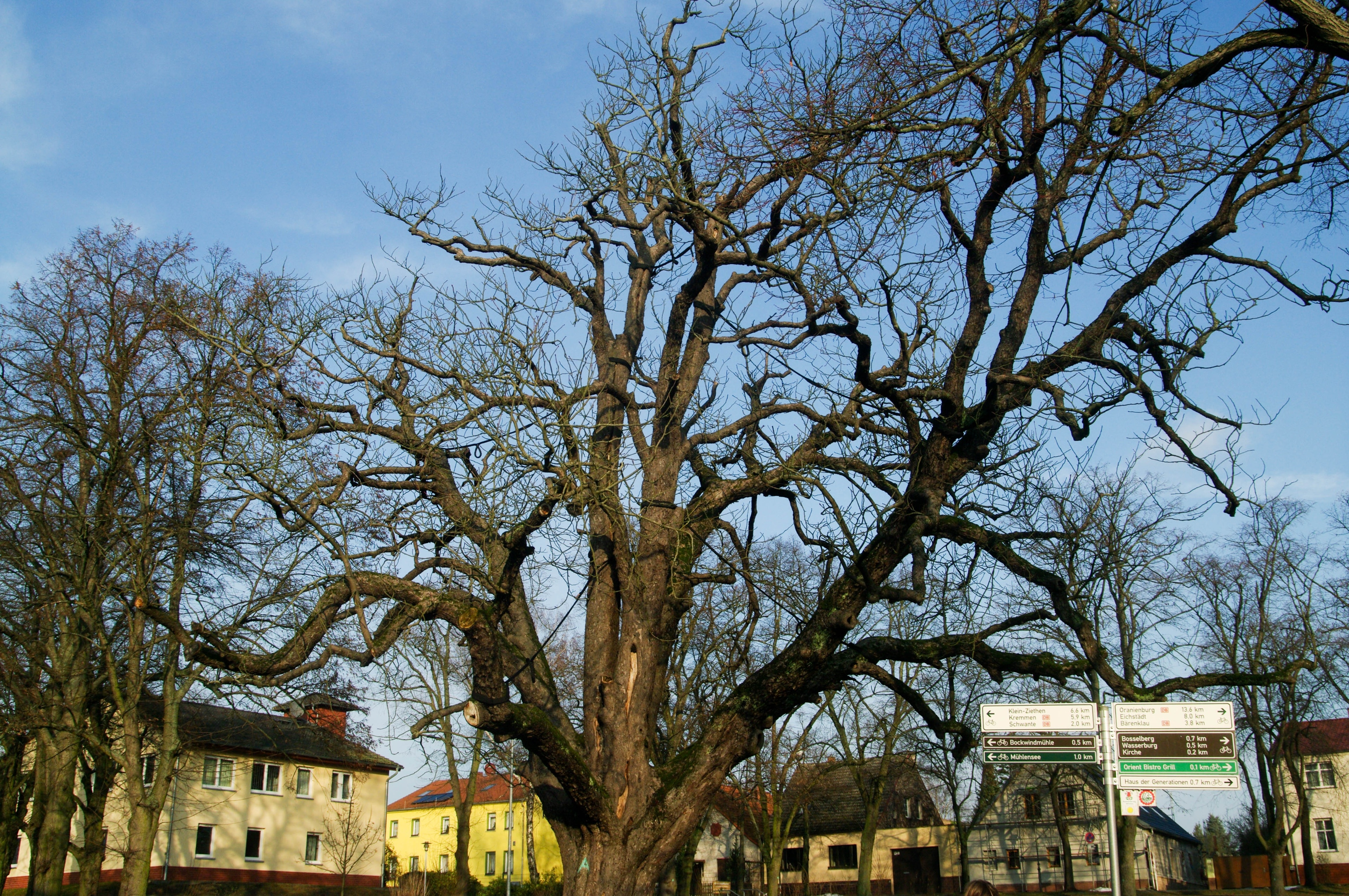 Oberkraemer, Brandenburg Region, Germany