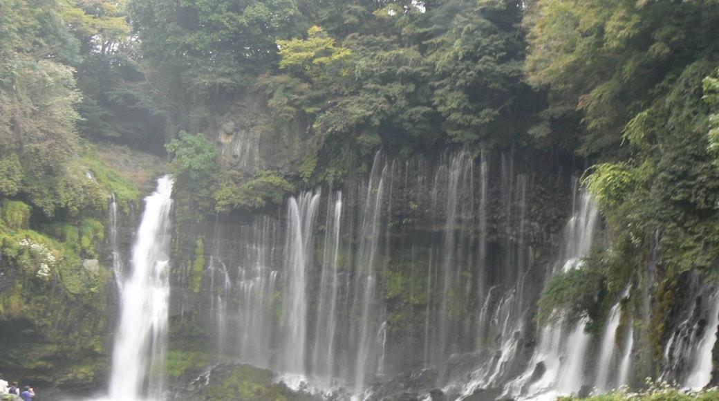 田附宏秀 (CC BY) 的「白絲瀑布」相片 / 裁剪自原有相片