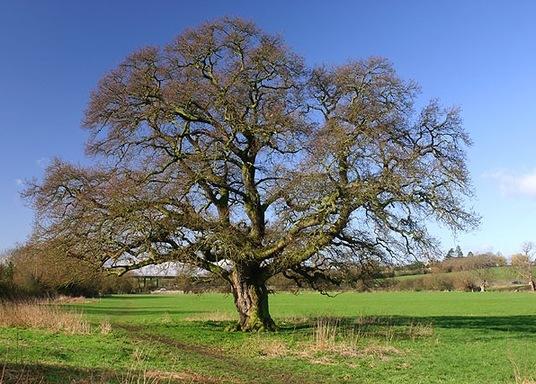 Bredons Hardwick, Egyesült Királyság