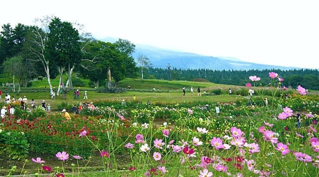 "Photo ""Shinano"" by Hiroaki Kaneko (CC BY-SA) / Cropped from original"