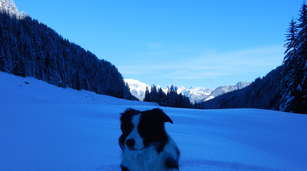 """Photo """"Ziano di Fiemme"""" by Maurizio Ceol (CC BY) / Cropped from original"""