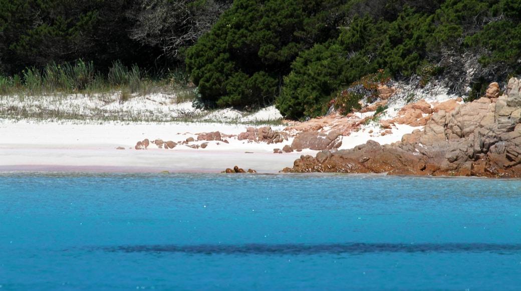 "Photo ""Budelli Island"" by Carlo Pelagalli (CC BY-SA) / Cropped from original"