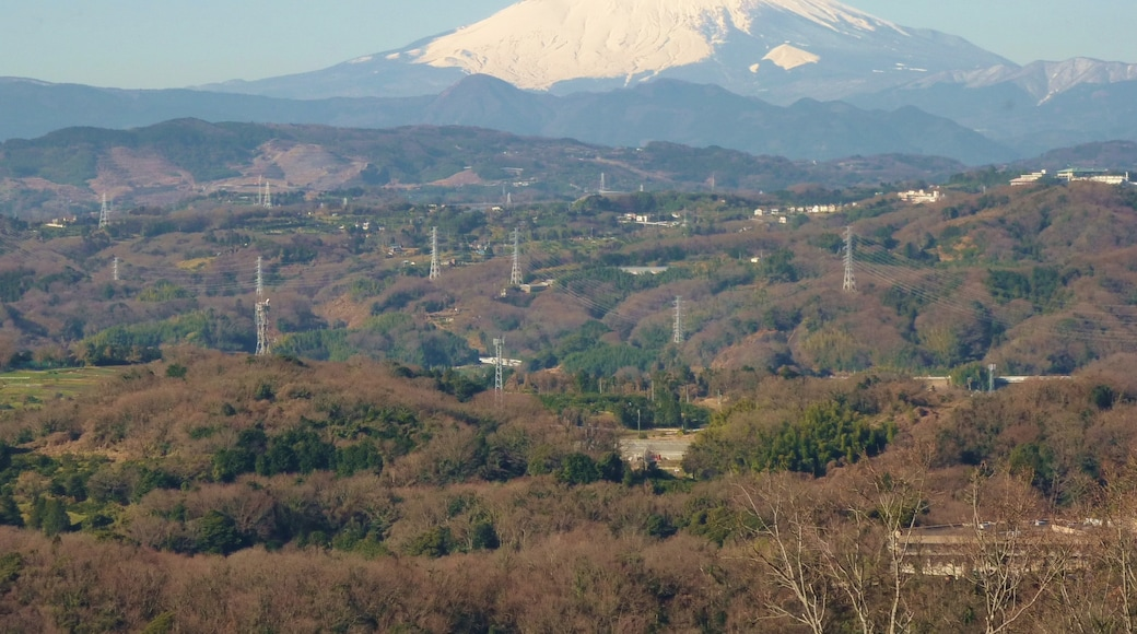 """Photo """"Oiso"""" by Quercus acuta (page does not exist) (CC BY-SA) / Cropped from original"""