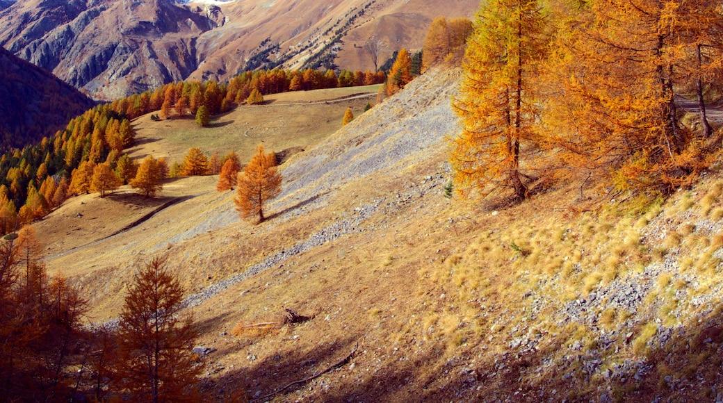 "Foto ""Tende"" von Fulvio Spada (CC BY-SA)/zugeschnittenes Original"
