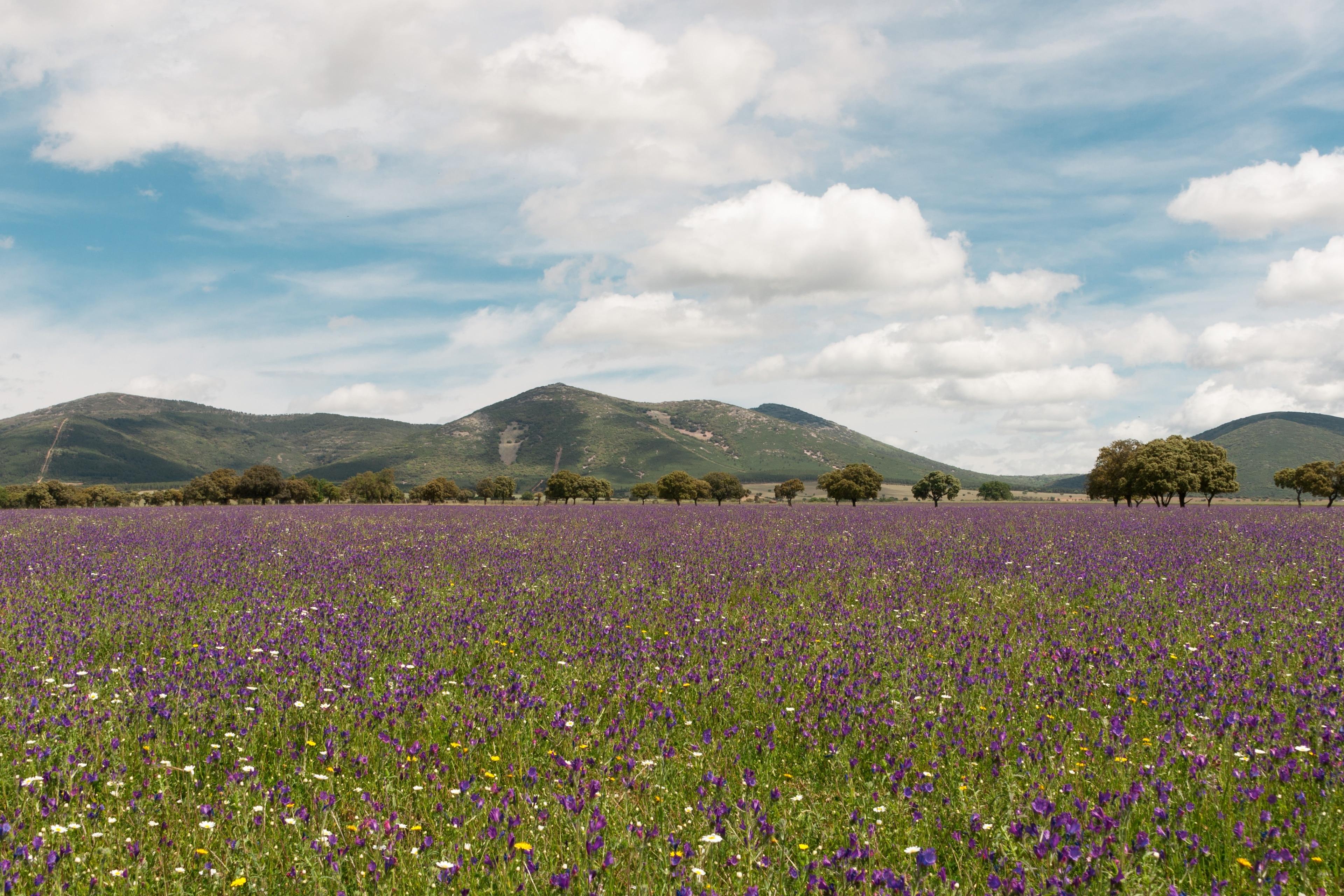 Retuerta del Bullaque, Castilla-La Mancha, España