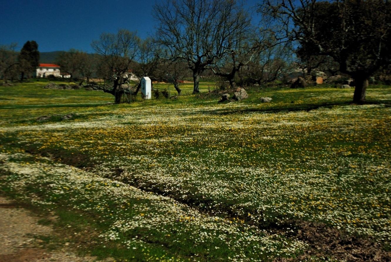 Malpartida de Plasencia, Extremadura, Spanje