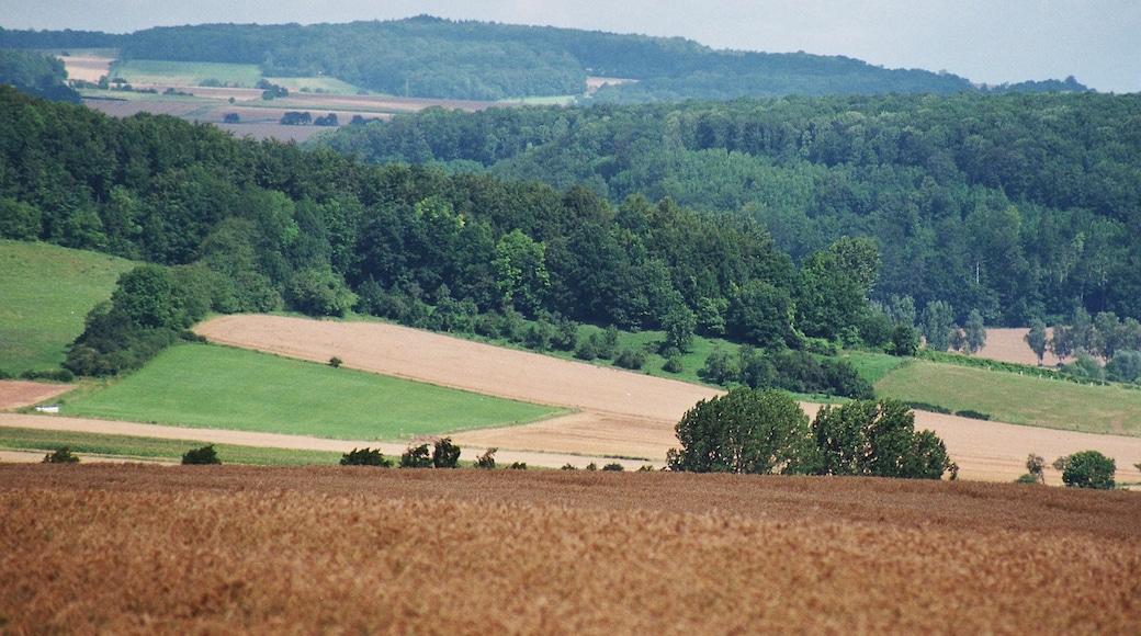 """Foto """"Münden Nature Park"""" von Dguendel (page does not exist) (CC BY)/zugeschnittenes Original"""