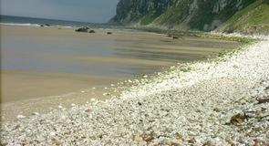 Speeton Sands