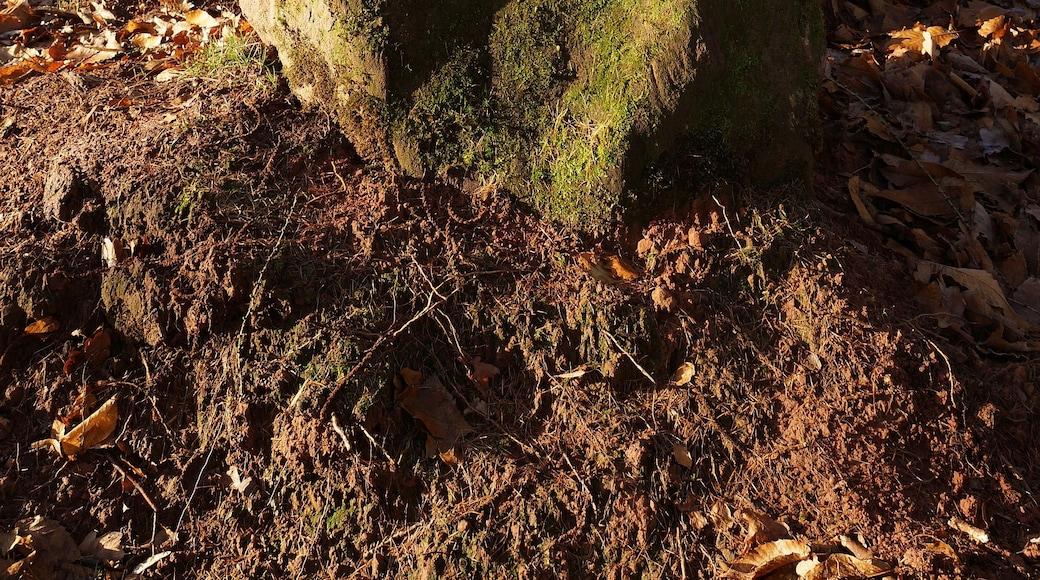 """Foto """"Annweiler am Trifels"""" von Pfalz39 (page does not exist) (CC BY-SA)/zugeschnittenes Original"""