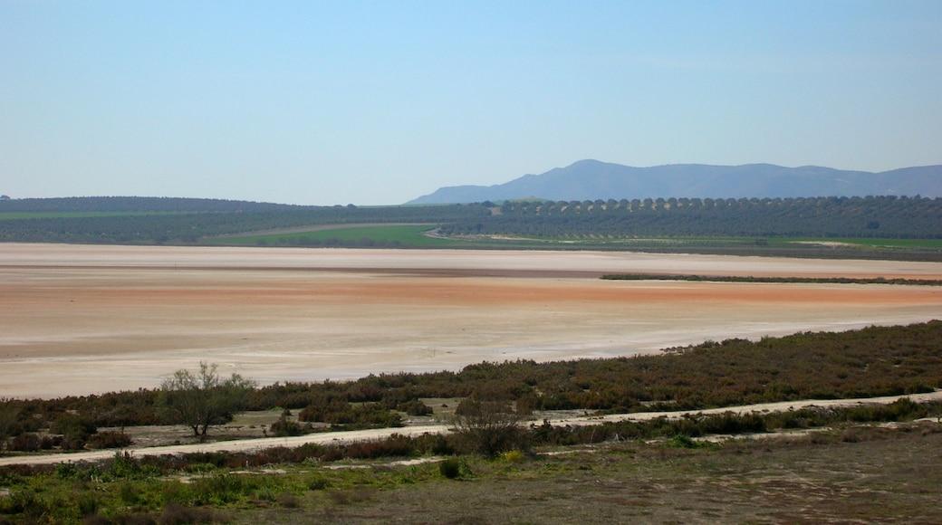 "Photo ""Fuente de Piedra"" by Gzzz (CC BY-SA) / Cropped from original"