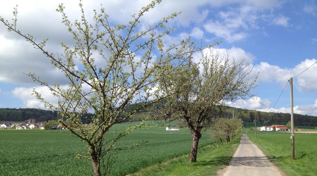 """Foto """"Habichtswald Nature Park"""" von Feuermond16 (CC BY-SA)/zugeschnittenes Original"""