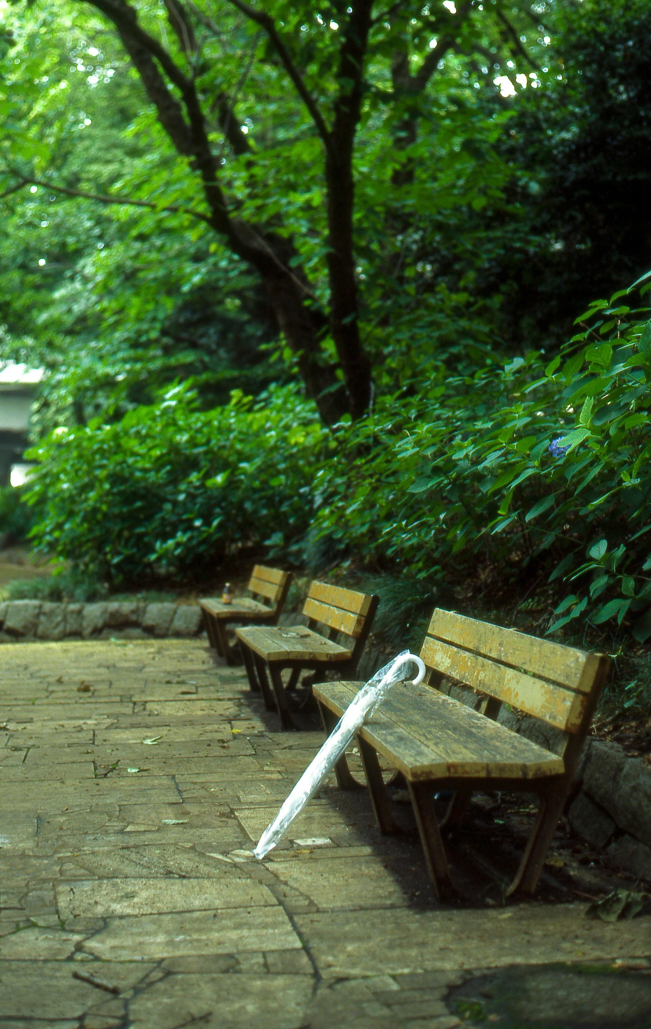Suginami, Tokyo, Tokyo Prefecture, Japan