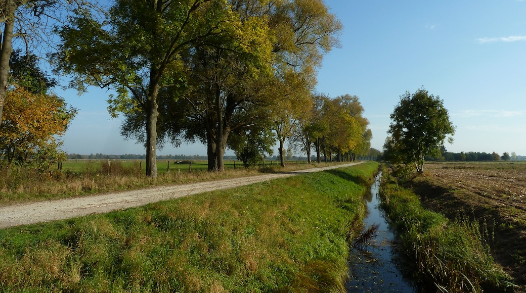 Foto 'Burgwedel' van Puusterke (CC BY-SA) / bijgesneden versie van origineel