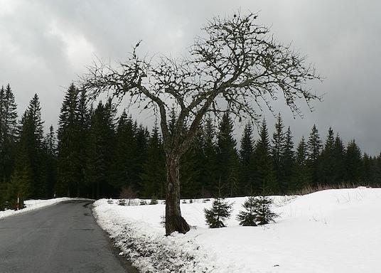 Filipova Huť, Czech Republic