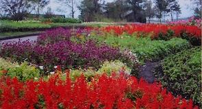 Kuju virágpark