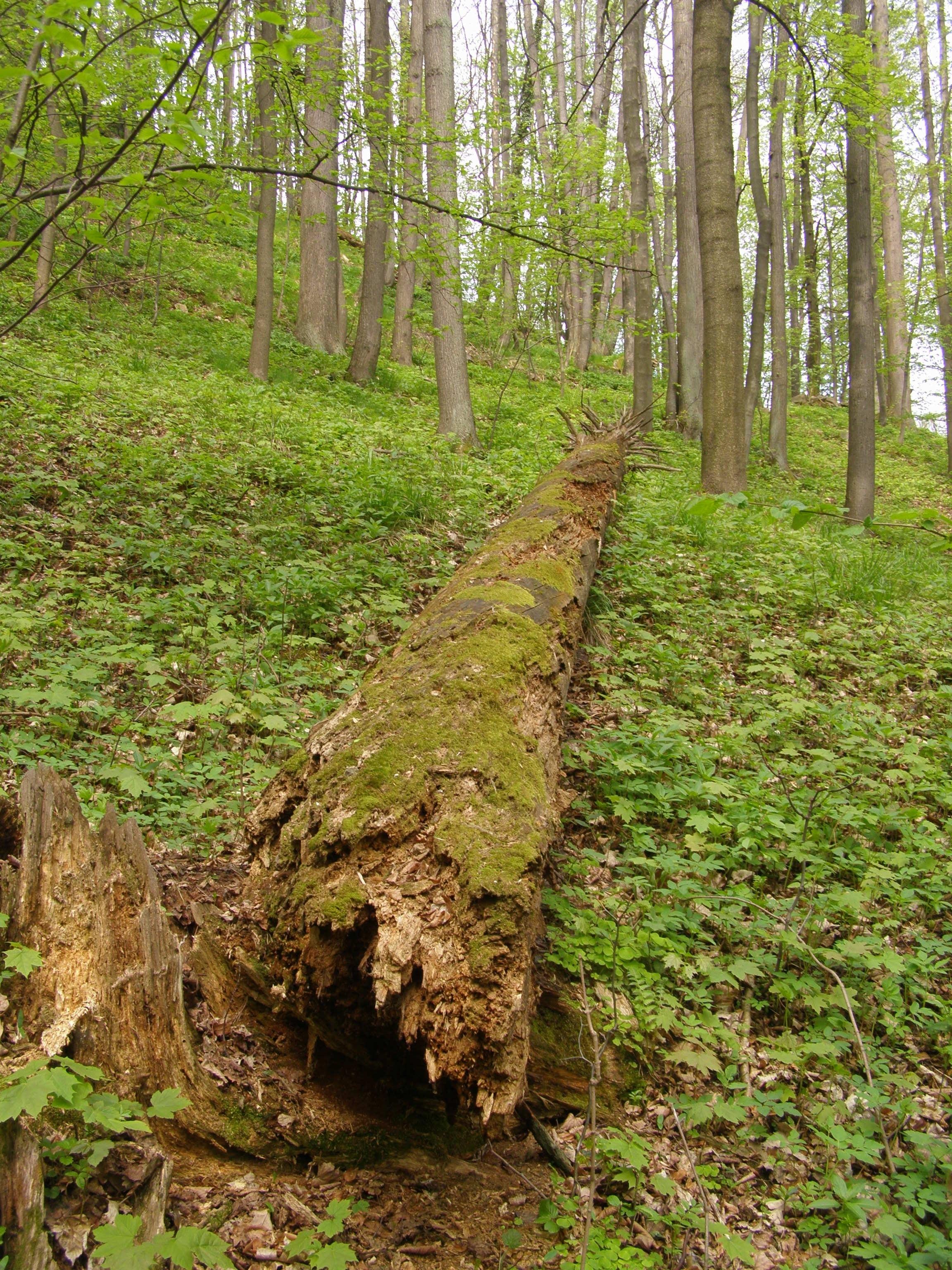 Liberec District, Liberec Region, Czech Republic