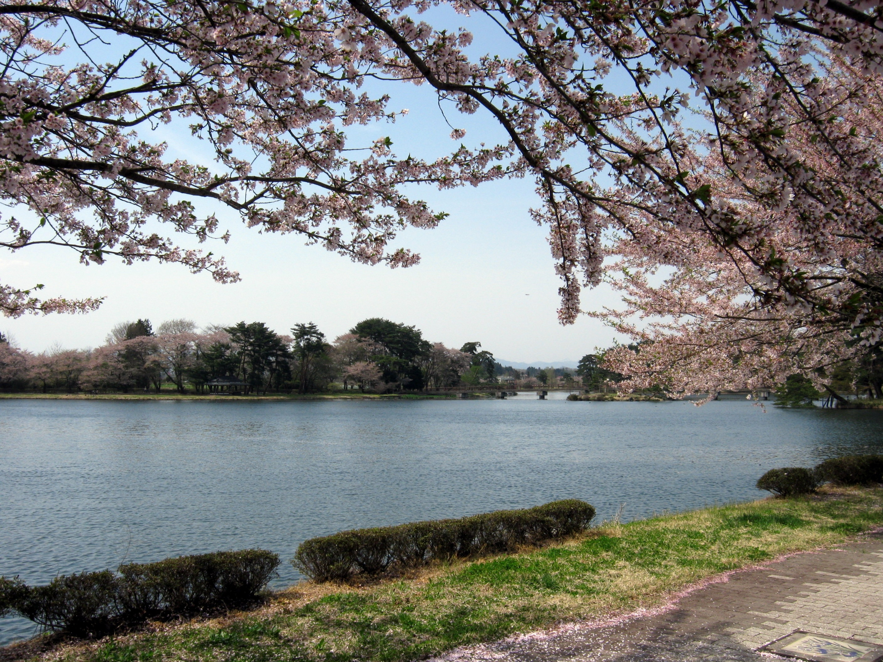 "Photo ""大池公園(矢吹町)"" by Duff Figgy (Creative Commons Attribution-Share Alike 3.0) / Cropped from original"