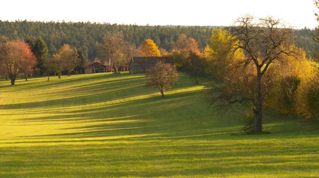 «Schömberg», photo de Dg-505 (CC BY) / rognée de l'originale