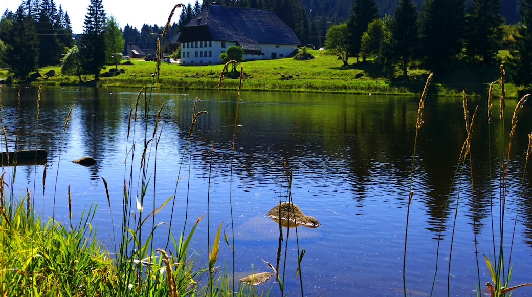 «Schönwald im Schwarzwald», photo de Dg-505 (CC BY) / rognée de l'originale
