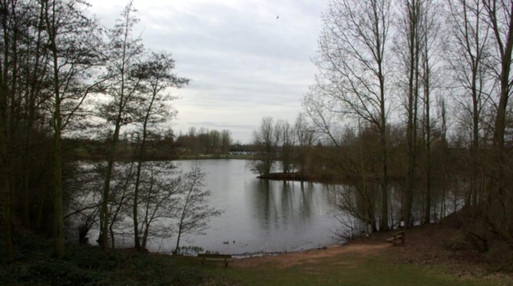 «Parc Ryton Pools Country Park», photo de Keith Williams (CC BY-SA) / rognée de l'originale