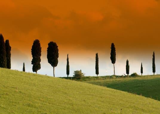 سيريتو غيدي, إيطاليا