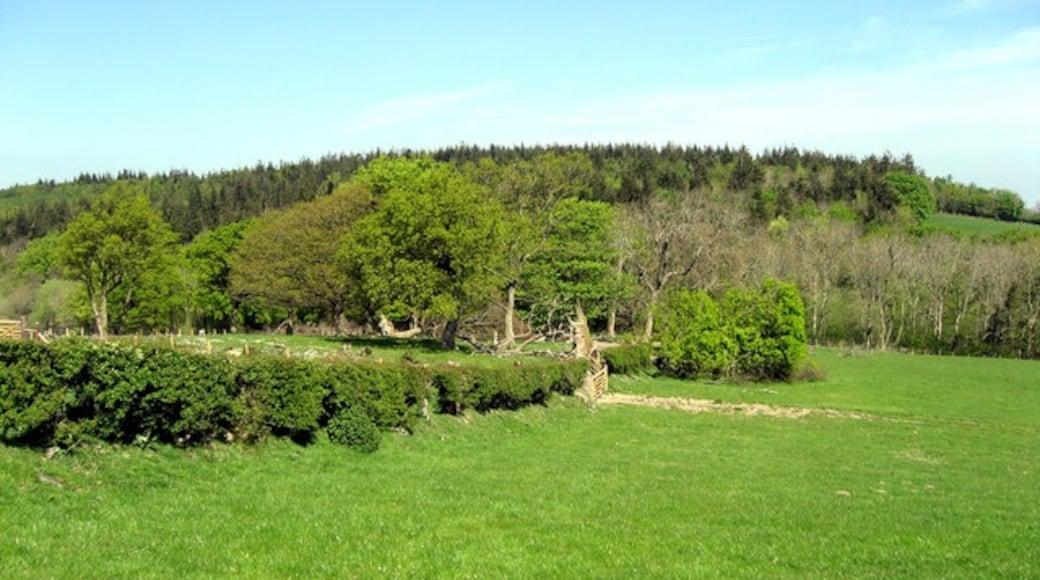 """Photo """"Llannefydd"""" by Alwyn Williams (CC BY-SA) / Cropped from original"""