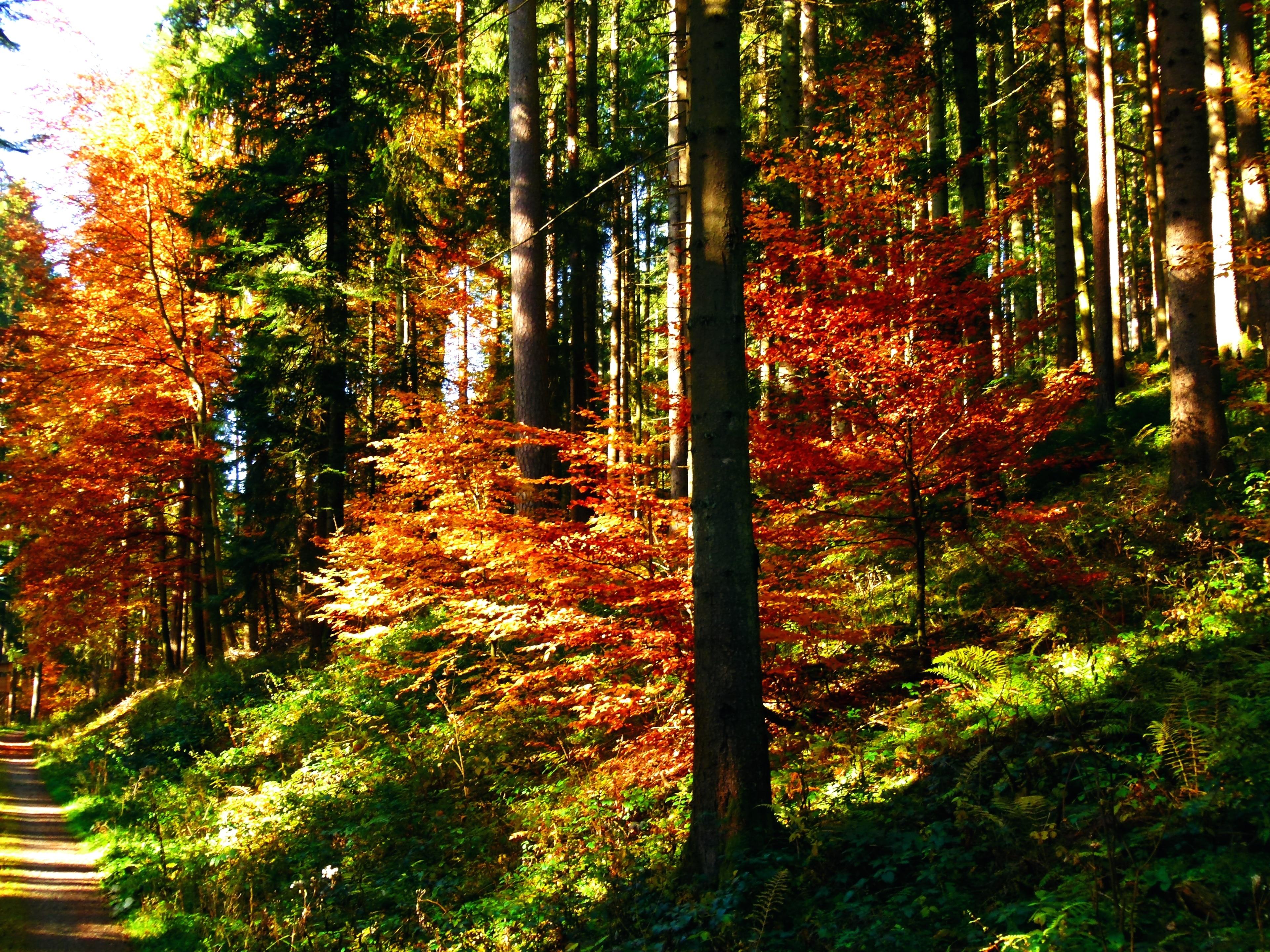 Baiersbronn, Baden-Württemberg, Germany