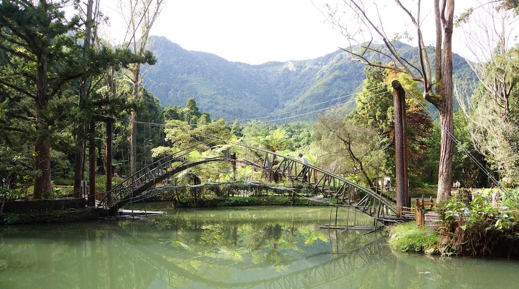 lienyuan lee (CC BY) 的「溪頭」相片 / 裁剪自原有相片