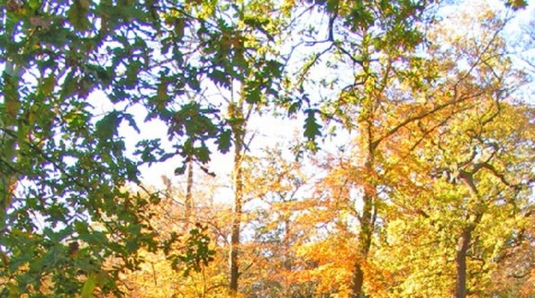 """Foto """"Buckhurst Hill"""" por Brian Gotts (CC BY-SA) / Recortada de la original"""