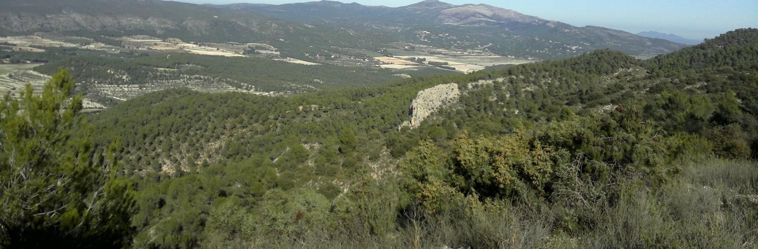 伊維, 西班牙