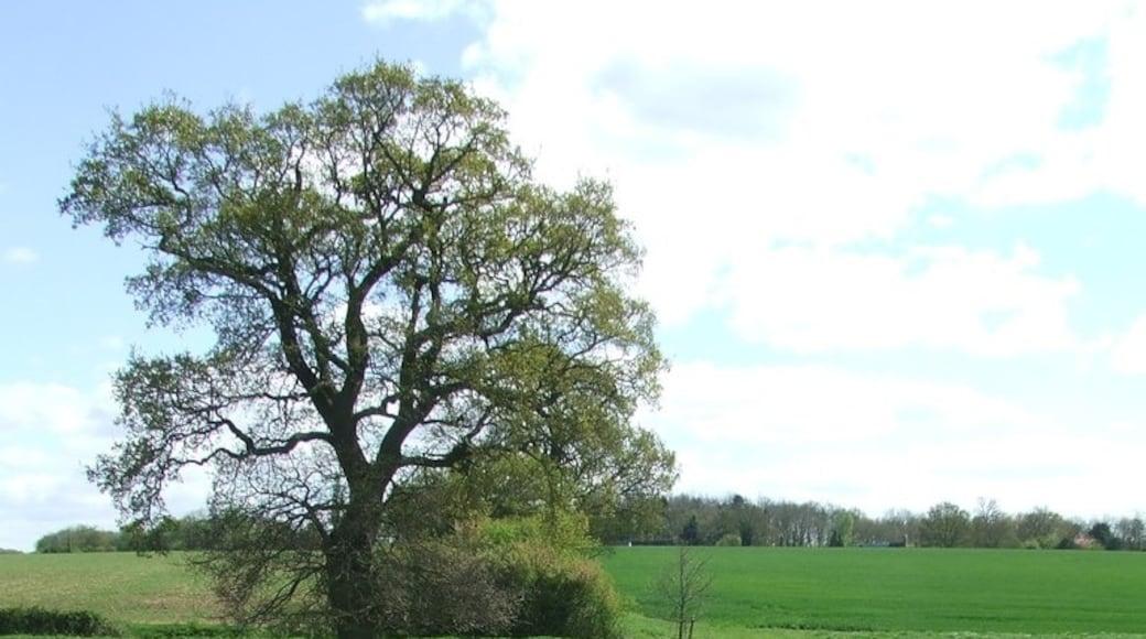 """Foto """"Braintree"""" von Keith Evans (CC BY-SA)/zugeschnittenes Original"""