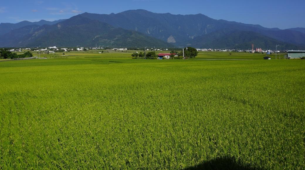 lienyuan lee (CC BY) 的「池上」相片 / 裁剪自原有相片