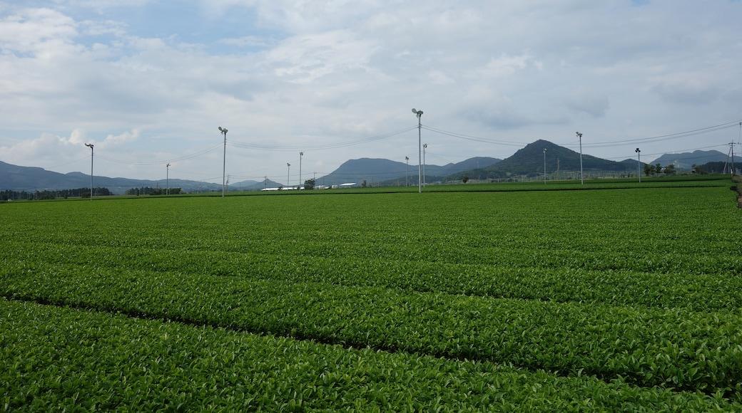 "Photo ""Minamikyushu"" by 690 Noda (CC BY) / Cropped from original"