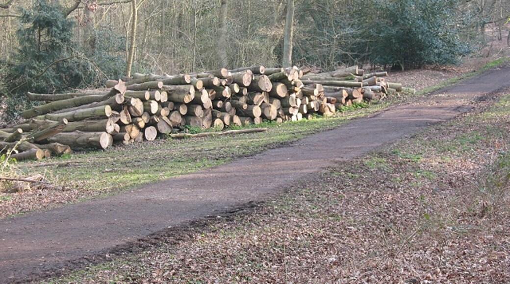 Foto 'Buckhurst Hill' van Stephen Craven (CC BY-SA) / bijgesneden versie van origineel
